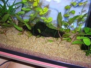 photo http://www.aquariophilie.org/images/article/Le_cyclage_d_un_bac_neuf_avec_l_aide_des_bacteries_par_l_atelier_de_l_Association_Aquariophilie_org_a01171739_8.jpeg