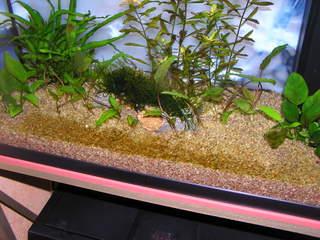 photo http://www.aquariophilie.org/images/article/Le_cyclage_d_un_bac_neuf_avec_l_aide_des_bacteries_par_l_atelier_de_l_Association_Aquariophilie_org_a01171740_10.jpeg