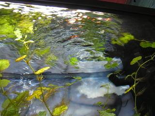 photo http://www.aquariophilie.org/images/article/Le_cyclage_d_un_bac_neuf_avec_l_aide_des_bacteries_par_l_atelier_de_l_Association_Aquariophilie_org_a01171740_9.jpeg