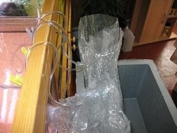 photo http://www.aquariophilie.org/images/article/Les_Discus_sauvages_origine_et_maintenance_a04180529_7.jpeg