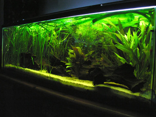 photo http://www.aquariophilie.org/images/article/Les_differents_types_de_bacs_pour_la_maintenance_des_crevettes__a03032149_3.jpeg