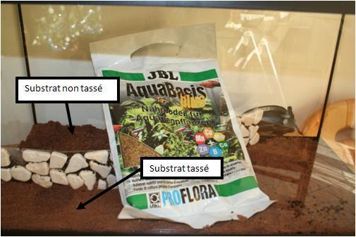 Mise en place d un aquarium en photo for Substrat pour aquarium