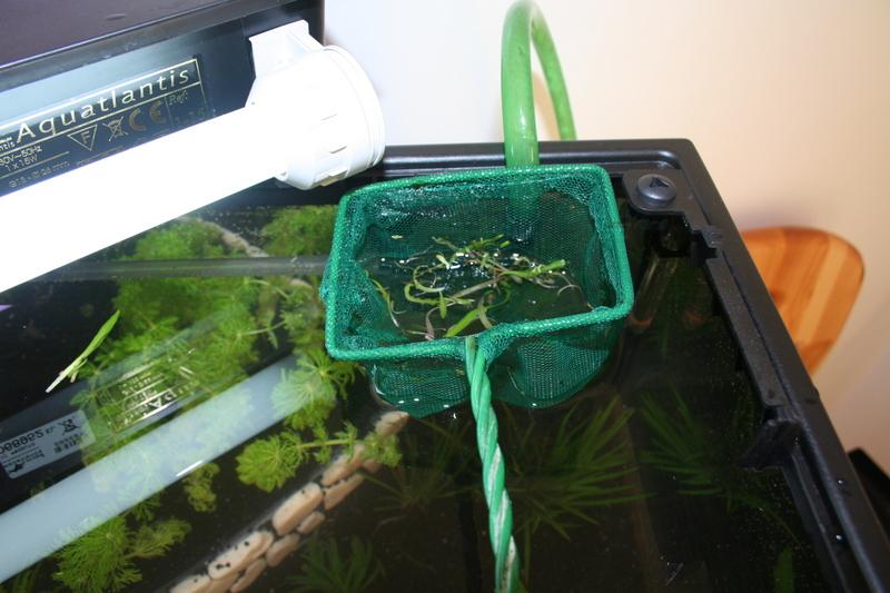 photo http://www.aquariophilie.org/images/article/Mise_en_place_d_un_aquarium_en_photo_a12211923_10.jpeg