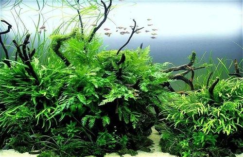 photo http://www.aquariophilie.org/images/article/Mise_en_place_d_un_aquarium_en_photo_the-lost-path-greg78520.jpg