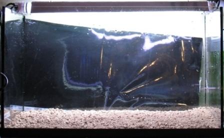 photo http://www.aquariophilie.org/images/article/Mise_en_route_et_evolution_d_un_bac_plante_a04272021_2.jpeg