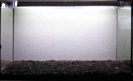 photo http://www.aquariophilie.org/images/article/Mise_en_route_et_evolution_d_un_bac_plante_a04272021_3.jpeg