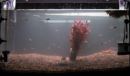 aquarium mise en route aquarium eau douce mise en route. Black Bedroom Furniture Sets. Home Design Ideas