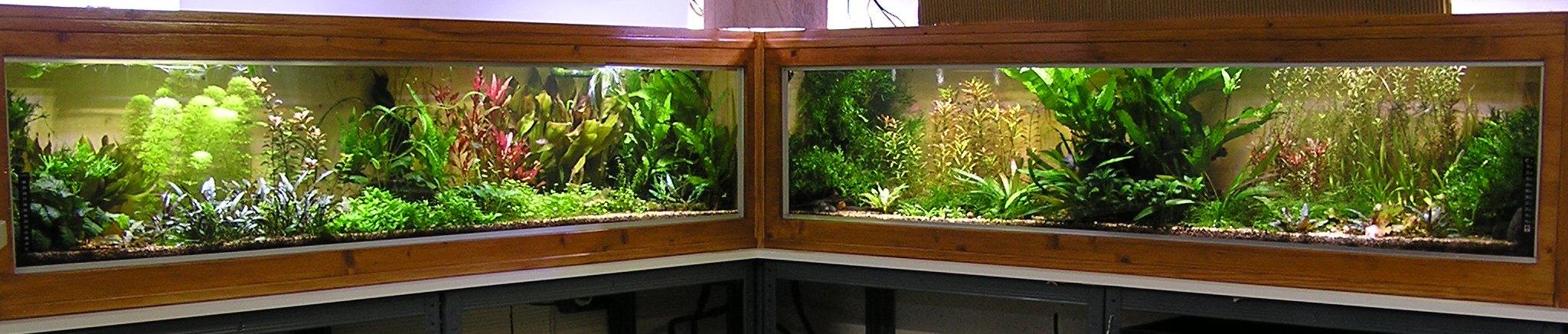 photo http://www.aquariophilie.org/images/article/Mon-aquarium-et-ses-secrets_a05311925_0.jpeg