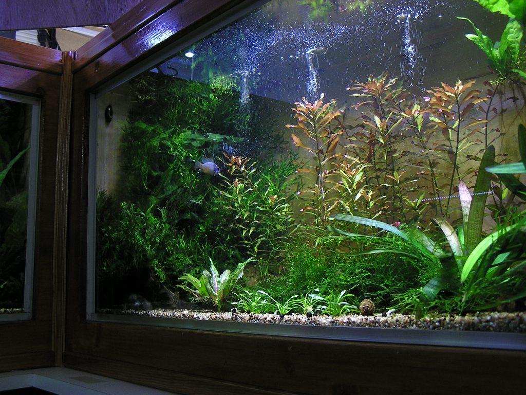 photo http://www.aquariophilie.org/images/article/Mon-aquarium-et-ses-secrets_a05312115_0.jpeg