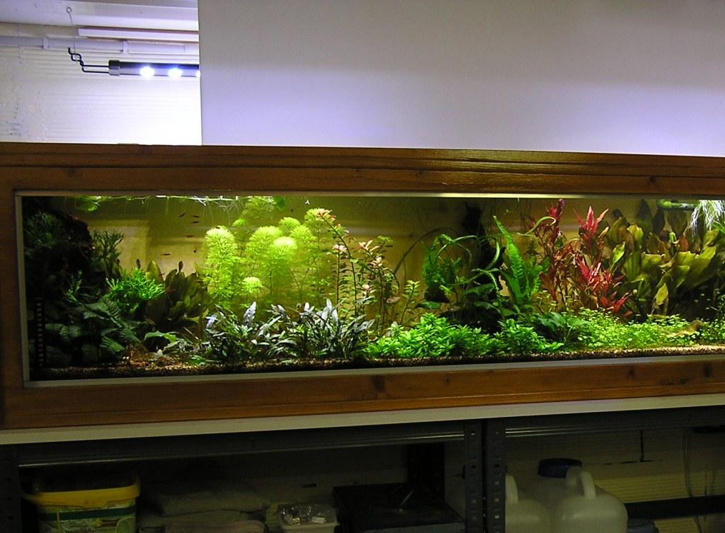 photo http://www.aquariophilie.org/images/article/Mon-aquarium-et-ses-secrets_a05312207_0.jpeg