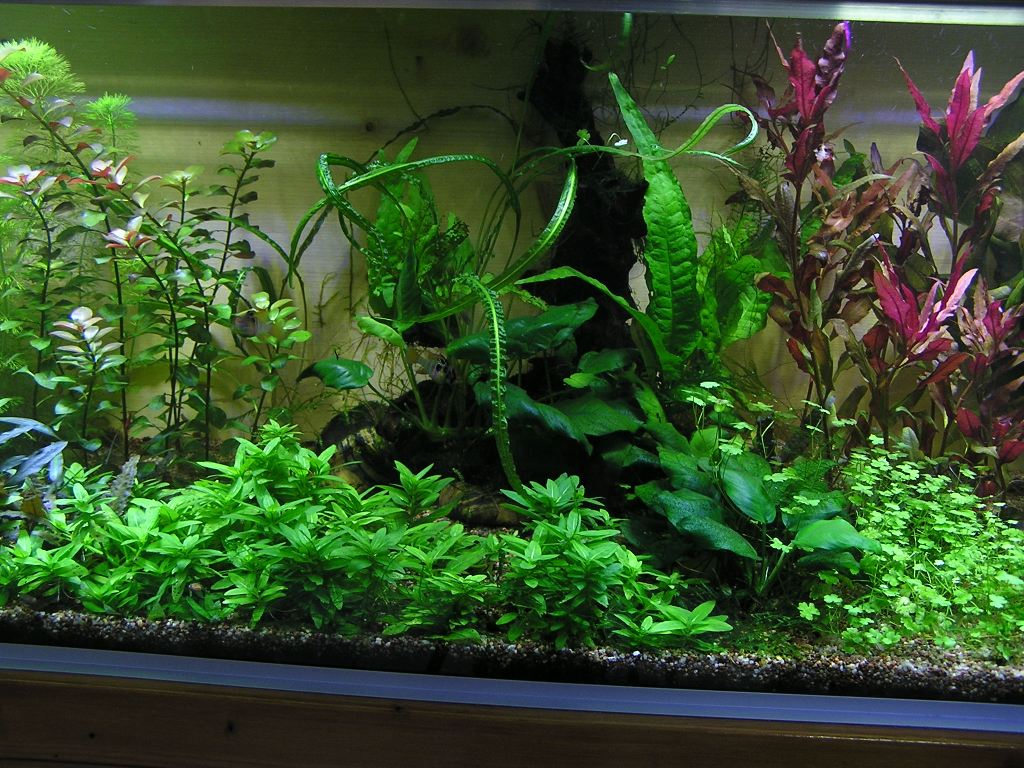 photo http://www.aquariophilie.org/images/article/Mon-aquarium-et-ses-secrets_a05312301_0.jpeg