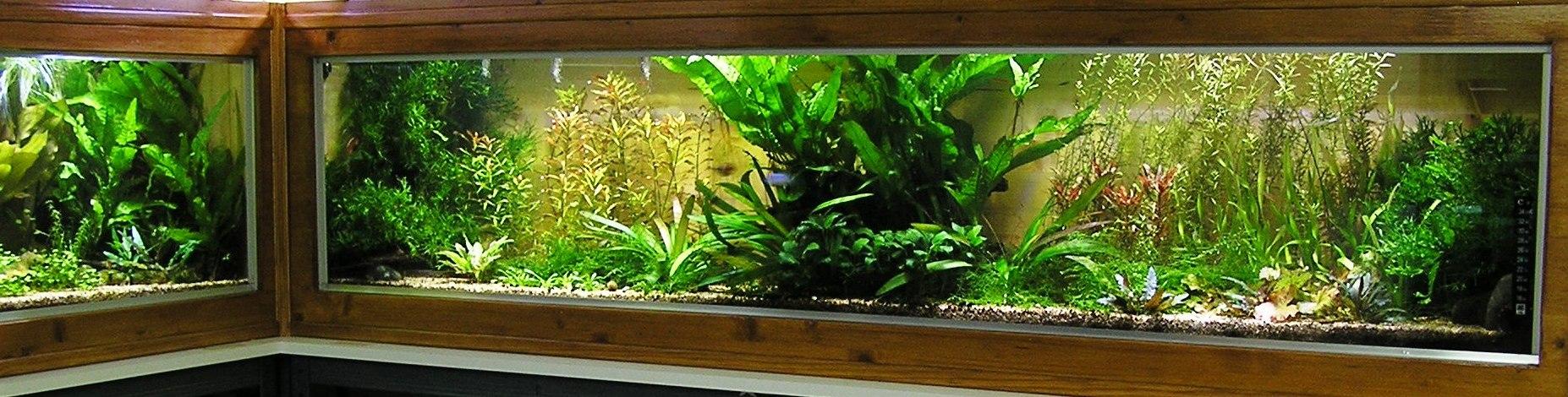 photo http://www.aquariophilie.org/images/article/Mon-aquarium-et-ses-secrets_a05312328_0.jpeg