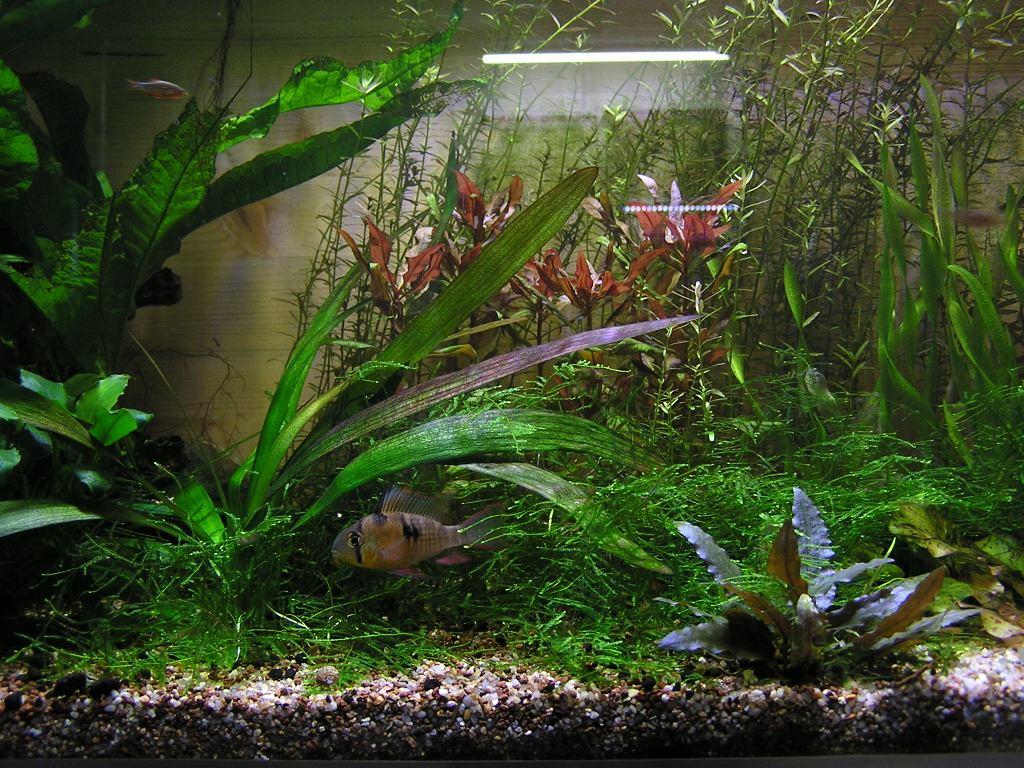 photo http://www.aquariophilie.org/images/article/Mon-aquarium-et-ses-secrets_a05312343_0.jpeg