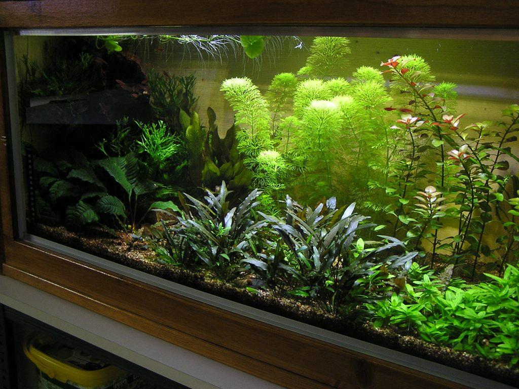 photo http://www.aquariophilie.org/images/article/Mon-aquarium-et-ses-secrets_a05312354_0.jpeg