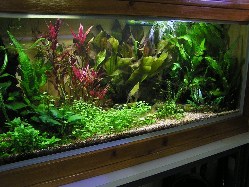 photo http://www.aquariophilie.org/images/article/Mon-aquarium-et-ses-secrets_a06010010_0.jpeg