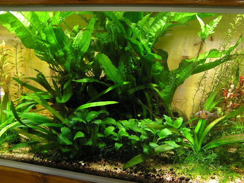 photo http://www.aquariophilie.org/images/article/Mon-aquarium-et-ses-secrets_a06010044_0.jpeg