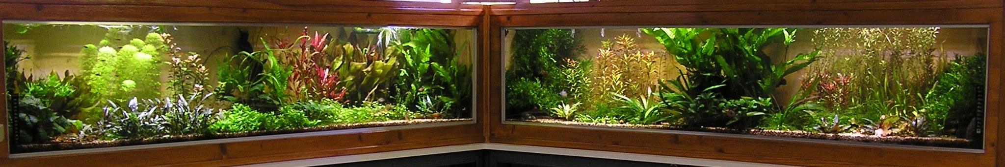 photo http://www.aquariophilie.org/images/article/Mon-aquarium-et-ses-secrets_a06010948_0.jpeg