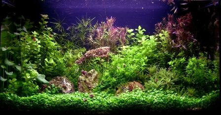 photo http://www.aquariophilie.org/images/article/Realisation_de_son_engrais_pour_aquarium_a09281214_11.jpeg