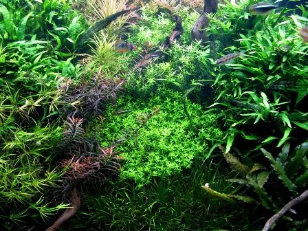 photo http://www.aquariophilie.org/images/article/Roles_et_besoins_des_plantes_a04261947_3.jpeg