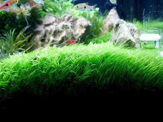 photo http://www.aquariophilie.org/images/article/Roles_et_besoins_des_plantes_a04261947_4.jpeg