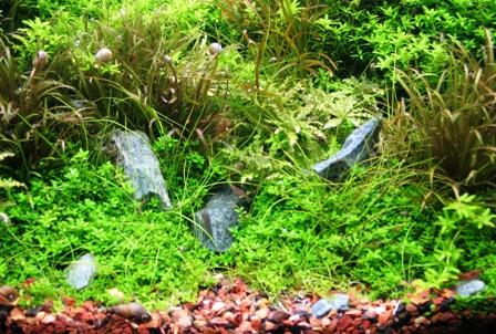 photo http://www.aquariophilie.org/images/article/Roles_et_besoins_des_plantes_a04261947_5.jpeg