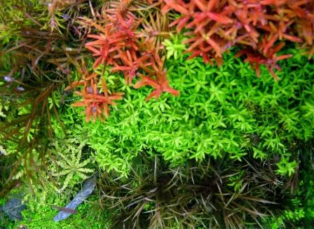 photo http://www.aquariophilie.org/images/article/Roles_et_besoins_des_plantes_a04261947_6.jpeg