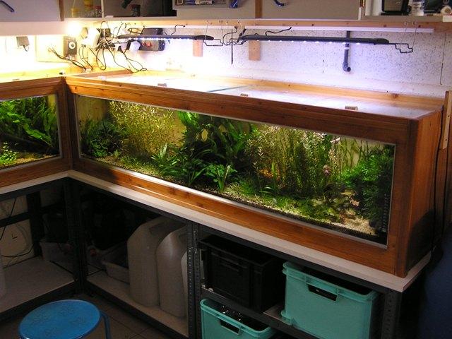 photo http://www.aquariophilie.org/images/article/Un-aquarium-en-bois_a12231436_0.jpeg