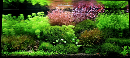 photo http://www.aquariophilie.org/images/article/l-aquascaping_a09061809_1.png