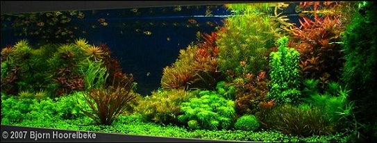 photo http://www.aquariophilie.org/images/article/l-aquascaping_a09061809_2.png