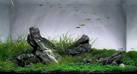 photo http://www.aquariophilie.org/images/article/l-aquascaping_a09061809_3.png