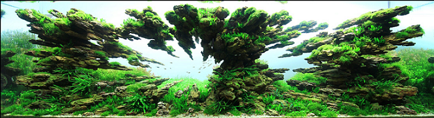 photo http://www.aquariophilie.org/images/article/l-aquascaping_a09062137_10.png