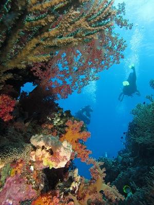 Careels Reef - Photo Anne Prouzet