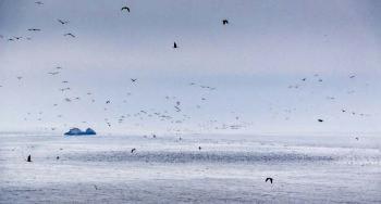 http://www.aquariophilie.org/images/oasis-vie-oceans.jpg