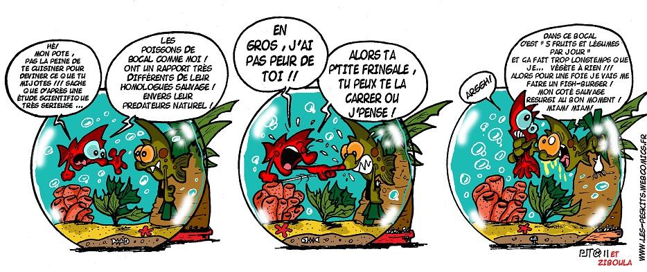 photo http://www.aquariophilie.org/images/peskits-quel-sauvageon.jpg