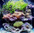 Aquarium de philou91
