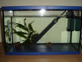 Passage d une population vers un nouvel aquarium mis en for Filtre bac a poisson