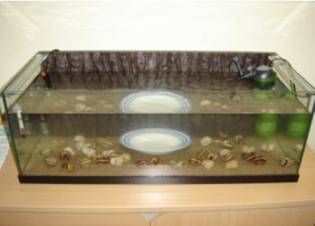 Passage d une population vers un nouvel aquarium mis en for Bac transport poisson
