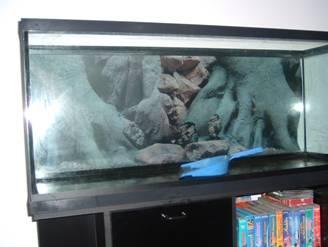 refection aquarium. Black Bedroom Furniture Sets. Home Design Ideas