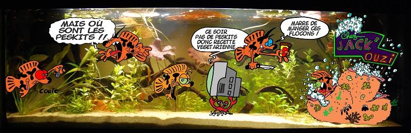 photo http://www.aquariophilie.org/img/peskits/aquarium_geant_peskits_abscent.jpg