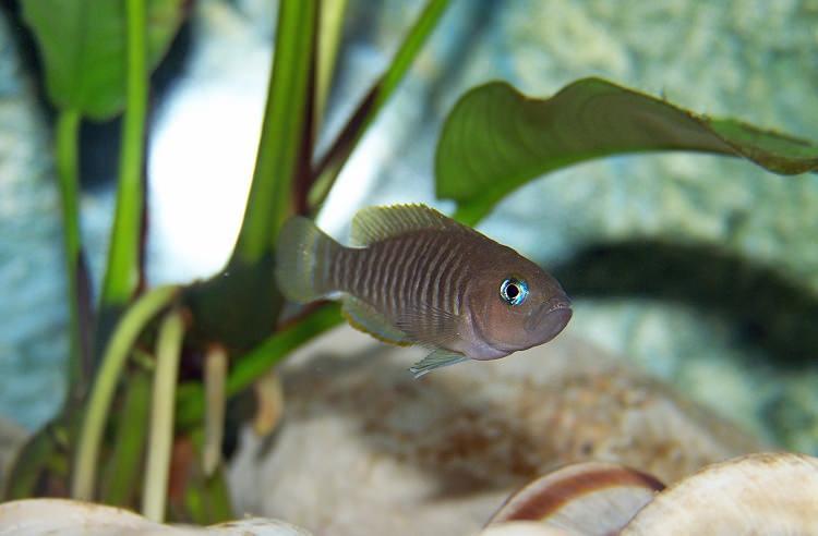 Photo Aquarium Tanganyika de minoche