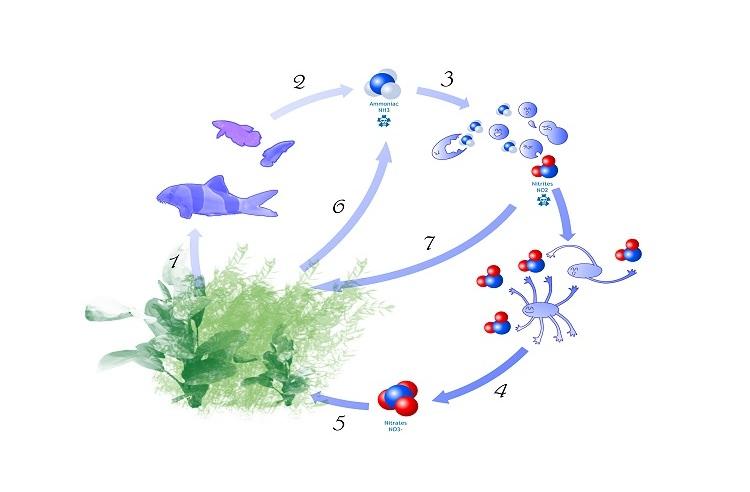 Photo Le cycle de l'azote