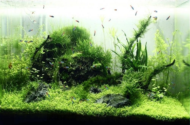 Photo Aquarium Nirvana de lupyo