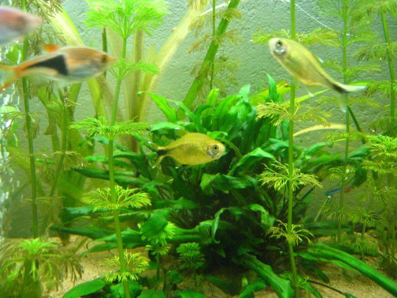 résistance aquarium