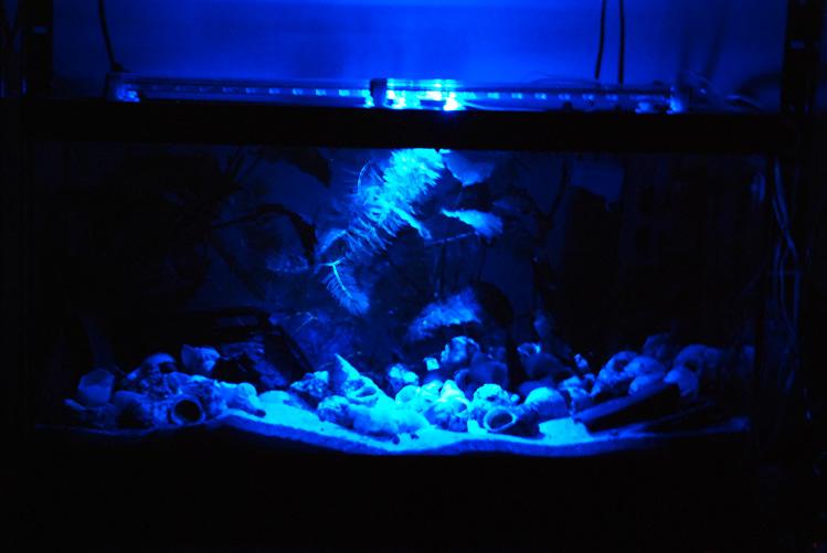 photo http://www.aquariophilie.org/pecky/public/pics/bricolage/LED/54Ltanga/DSC_0270.jpg