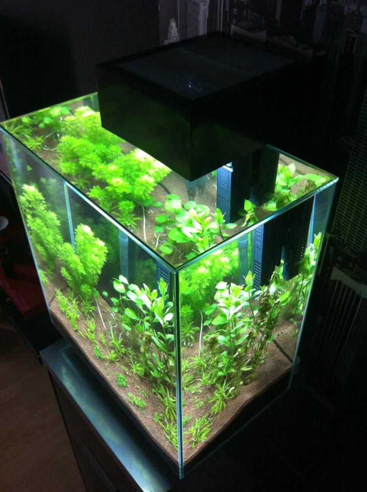 aquarium fluval edge 46 l par j r me78. Black Bedroom Furniture Sets. Home Design Ideas