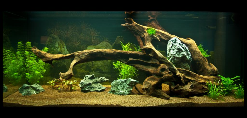 Aquarium amazon garden par dimarel for Racine aquarium