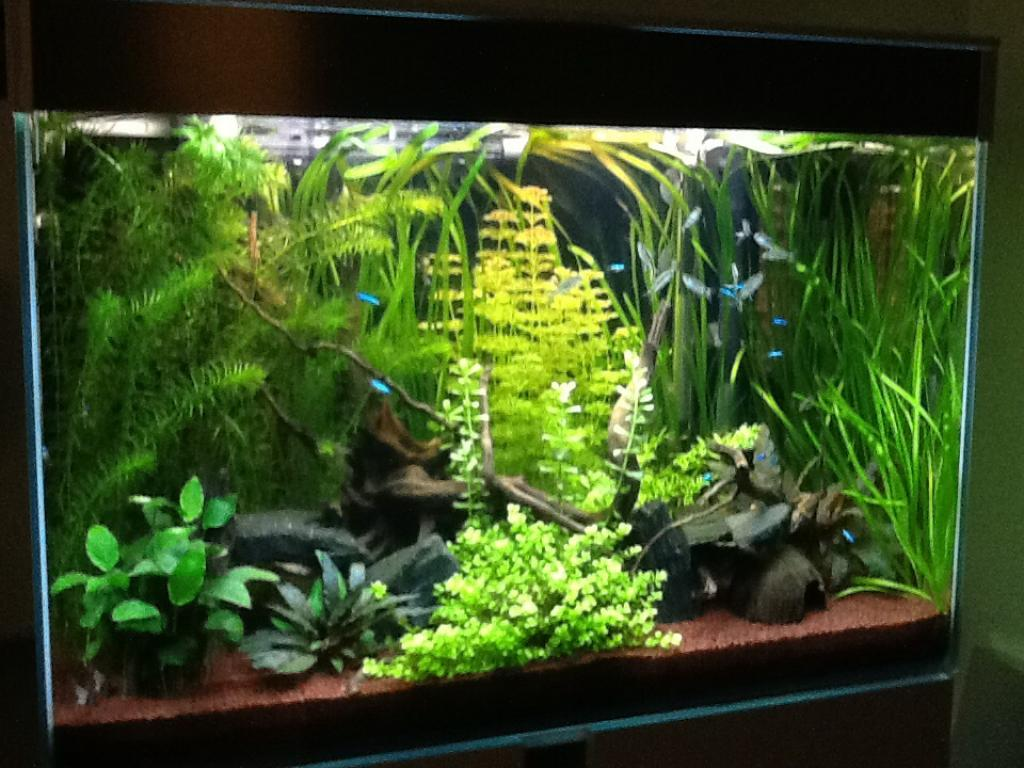 Aquarium 130 litres type amazonien par djoudjou for Aquarium bac