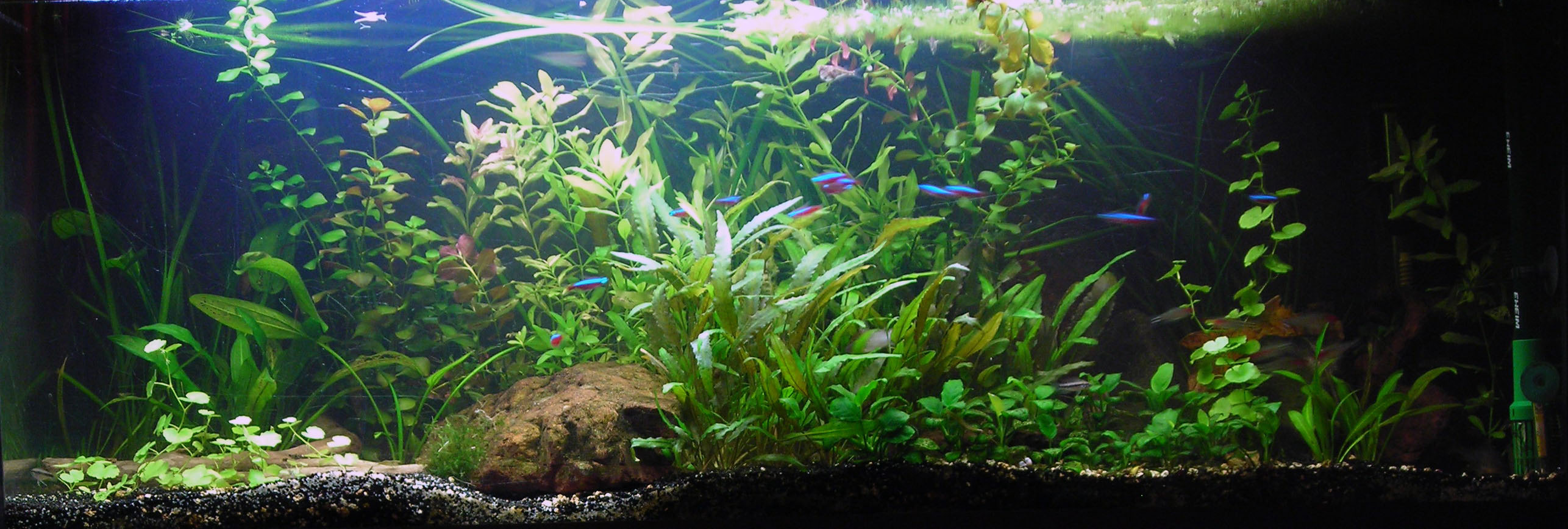 photo https://www.aquariophilie.org/aquarium/images/aq27ph16.jpg