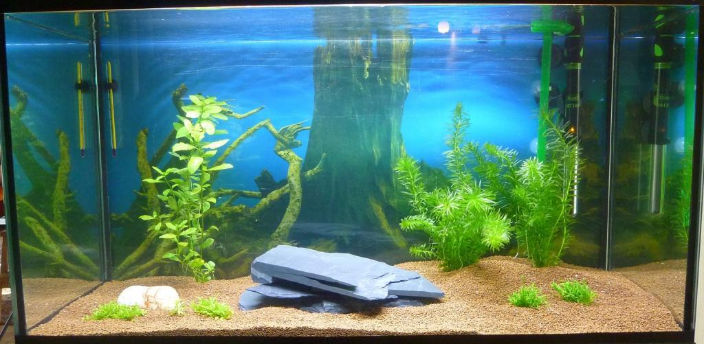 Aquarium 120l par 20100 for Bac a poisson 500l