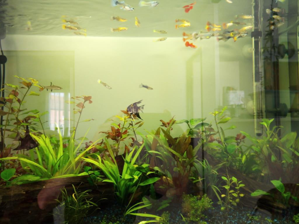 aquarium salon par bruno62. Black Bedroom Furniture Sets. Home Design Ideas